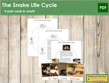 Snake Life Cycle Nomenclature Cards and Charts