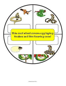 Snake Life Cycle Spinner - Egg Laying and Live Bearing Snakes!