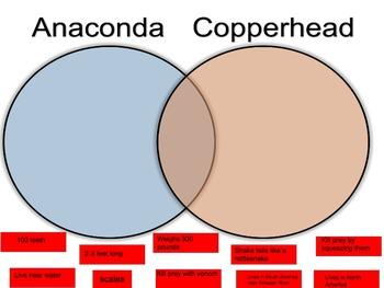 Snake Research Organizer and Venn Diagram