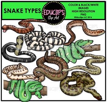 Snake Types Clip Art Bundle {Educlips Clipart}