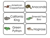 Snake Types Picture Word Flash Cards. Preschool flash card