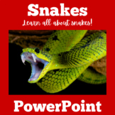 Snakes Activity | Snakes PowerPoint | Snakes Power Point