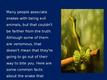 Snakes Activity   Snakes PowerPoint   Snakes Power Point