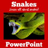 Snakes   PowerPoint Activity   Kindergarten 1st 2nd 3rd 4t