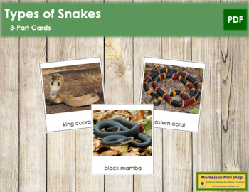 Snakes: 3-Part Cards