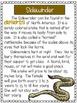 Snakes - A First Grade Literacy Center