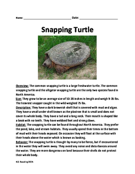 Snapping Turtle - Review Article Lesson Facts Information Questions Vocabulary