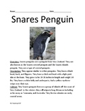 Snares Penguin - informational article review facts questions lesson