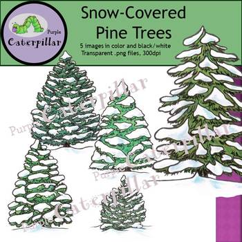 Snow Covered Pine Trees and Evergreens