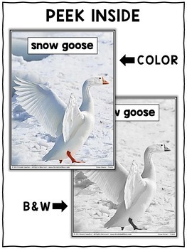 Close Reading Passage - Snow Goose Activities