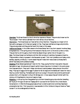 Snow Goose - Review Article Lesson Questions Vocabulary
