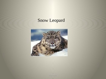 Snow Leopard - Power Point - Information Facts Pictures