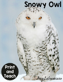 Snowy Owl Reading Passages