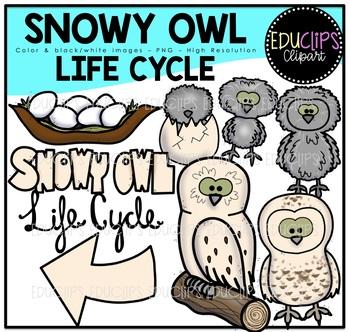 Snowy Owl Clip Art Bundle {Educlips Clipart}