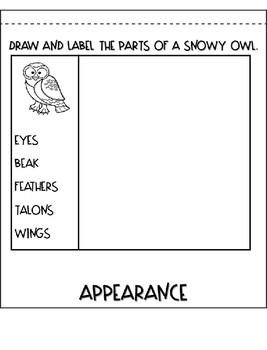 Snowy Owl Flipbook