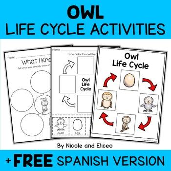 Vocabulary Activity - Snowy Owl Life Cycle
