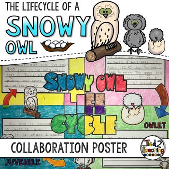 Snowy Owl Life Cycle Activity: Collaborative Research Poster