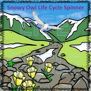 Snowy Owl (Life Cycle Spinner)