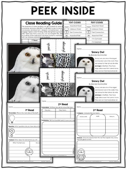 Close Reading Passage - Snowy Owl Activities