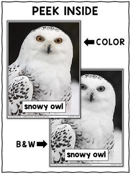 Close Reading Passage - Snowy Owl Activities