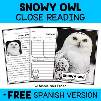 Snowy Owl Close Reading Passage Activities
