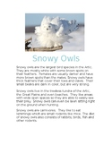 Snowy Owls Informational/Nonfiction Text Comprehension Pack
