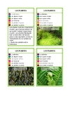 SoCarteS Les plantes