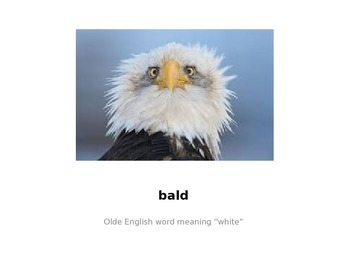 Soar to Success The Wonder of Bald Eagles