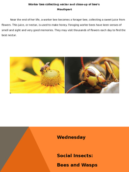 Social Inscets: Bees and Wasps