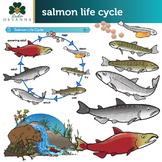 Sockeye Salmon Life Cycle Clip Art Set