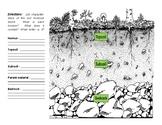 Soil Layers Diagram (Ecology)