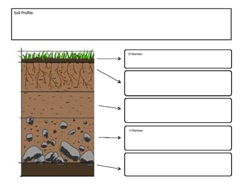 Soil Profile Graphic Organizer