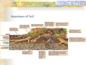 Soil and Erosion - Soil Conservation