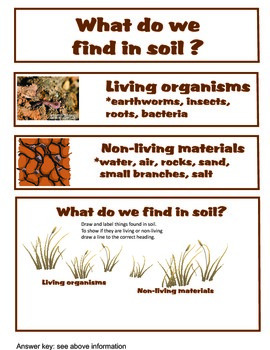 Soil & the Environment English version