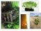 Soils In The Environment- Grade 3 Ontario Inquiry Bulletin Board Wonder Wall