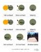 Solar Eclipse Montessori 3-part Cards