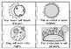 Solar eclipse little book(plus foldable booklet)