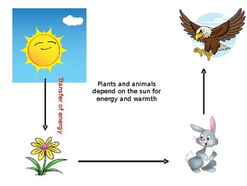 Solar energy and life on earth