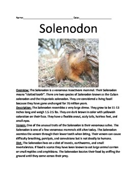Solenodon - Informational Article Facts Lesson Questions Vocabulary Activities