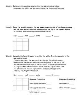 Solving Punnett Squares