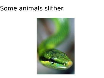 Some Animals...