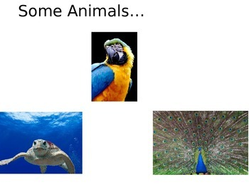 Some Animals...