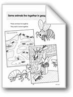 Some Animals Build Underground Homes