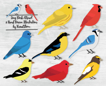 Song Bird Illustrations - 8 Hand Drawn Colorful Birds Clipart