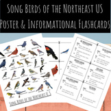Songbirds of the NorthEast U.S. | Poster and Informational