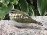 Songbird Stock Image