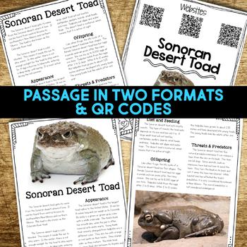 Sonoran Desert Toad: Informational Article, QR Code Research & Fact Sort