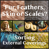 Sorting Activity: Exterior Coverings (Fur, Skin, Feathers,
