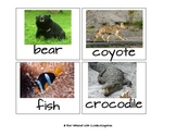 Sorting Animals by Characteristics