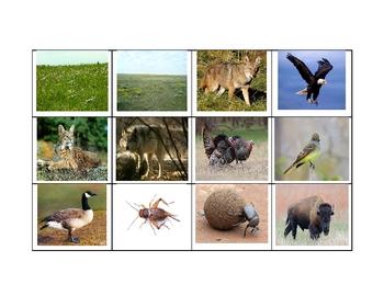 Sorting Biomes - Habitats